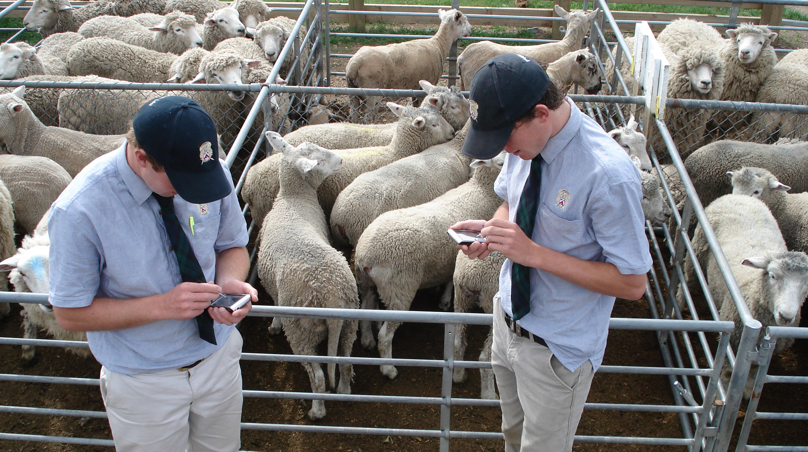 Agents using mobile devices at a saleyard